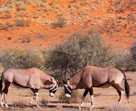 Animales De áfrica Animales Salvajes De áfrica Aventura