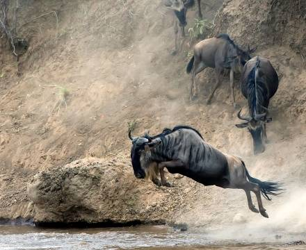 Animales De Africa Animales Salvajes De Africa Aventura Africa